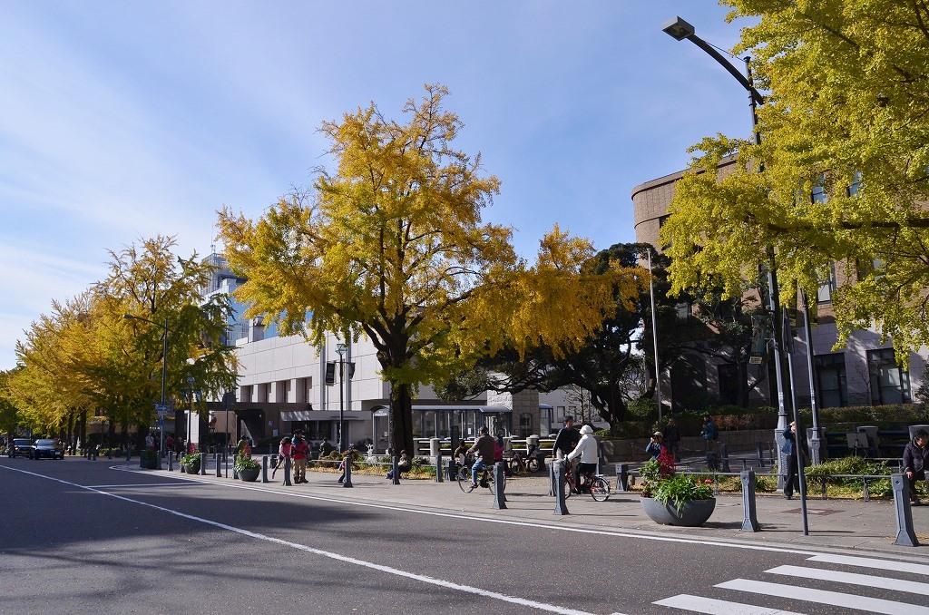 日本大通り ハッピーイエロー_d0065116_2223417.jpg