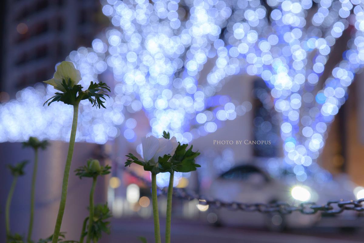 都会の片隅に咲く花_e0196140_23525535.jpg