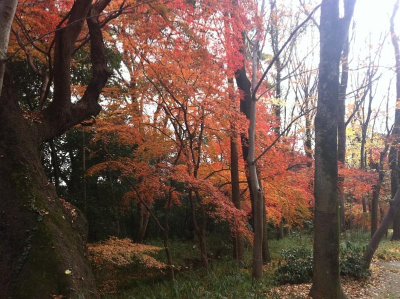 河合神社_b0206085_12503793.jpg