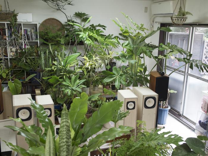 植物&スピーカー_e0276411_1555533.jpg