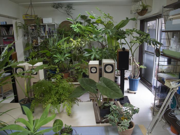 植物&スピーカー_e0276411_1556179.jpg