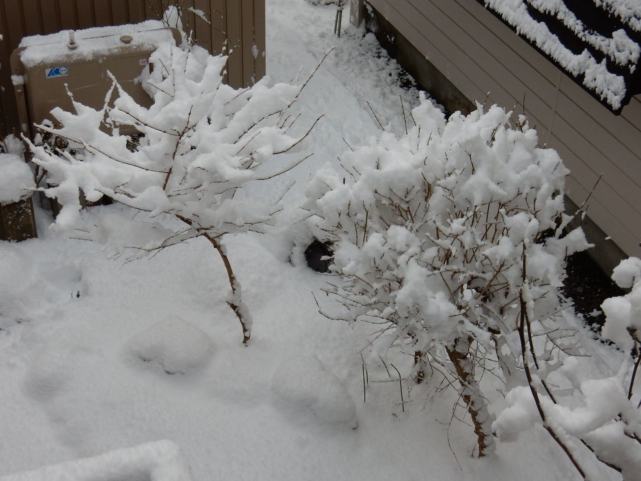 降雪ほどには積もらない_c0025115_16503816.jpg