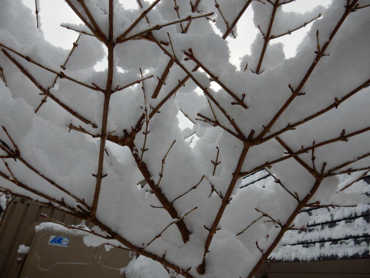 降雪ほどには積もらない_c0025115_16504148.jpg