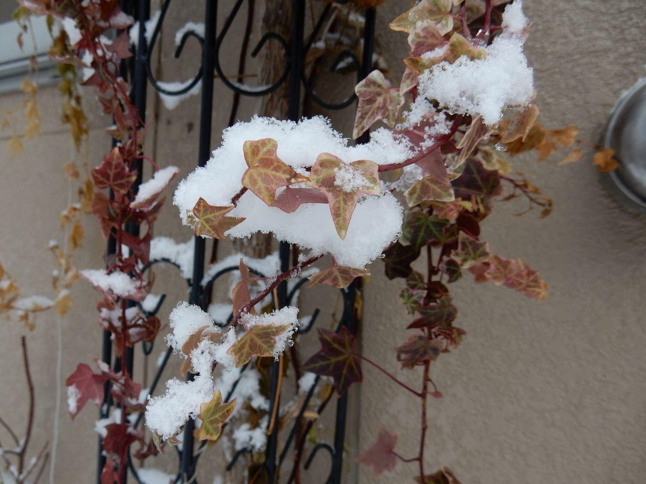 降雪ほどには積もらない_c0025115_16504457.jpg