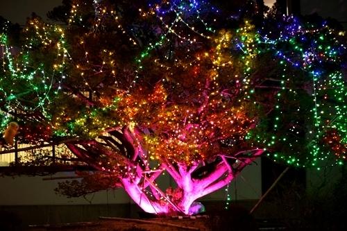 Merry ChristmasなNODA♪_c0259934_15561242.jpg