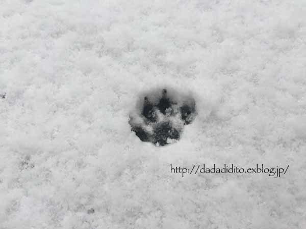 だぢんち。写真部 雪の巻_b0223446_14182301.jpg