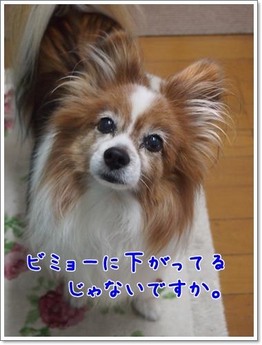 d0013149_00003868.jpg