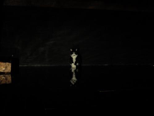 月夜の森 第七夜:オラ座_a0180681_05778.jpg