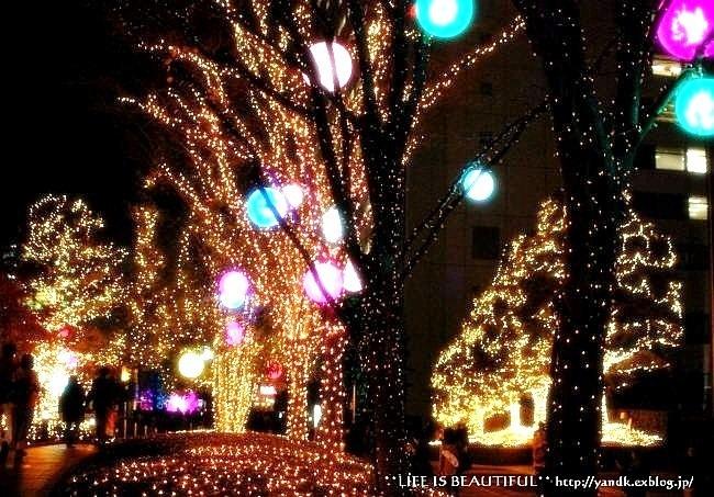 Christmas Illumination☆2015_d0083623_191868.jpg
