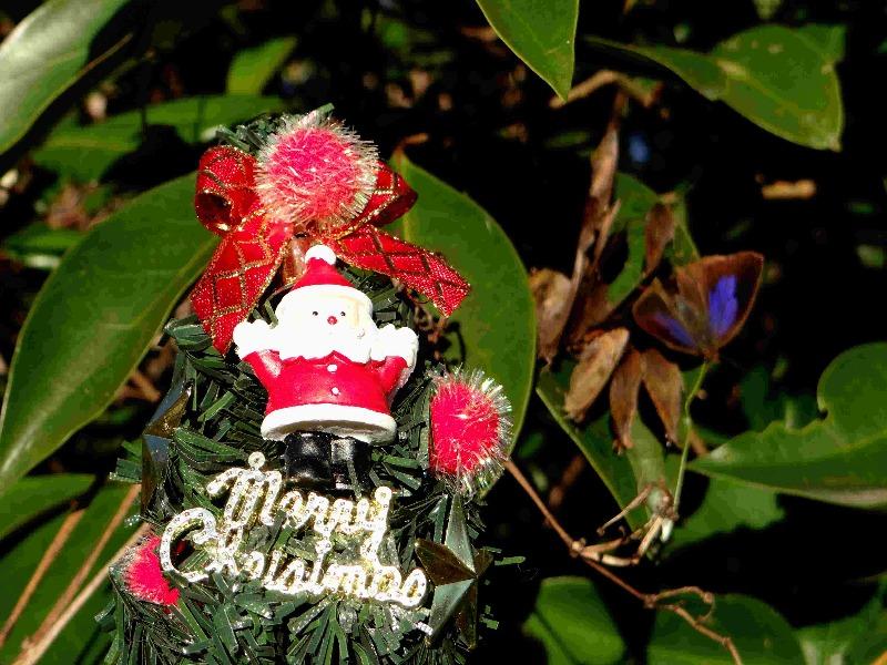 Merry Christmas!_d0254540_20354166.jpg