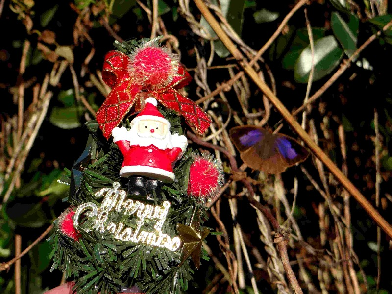 Merry Christmas!_d0254540_20355730.jpg