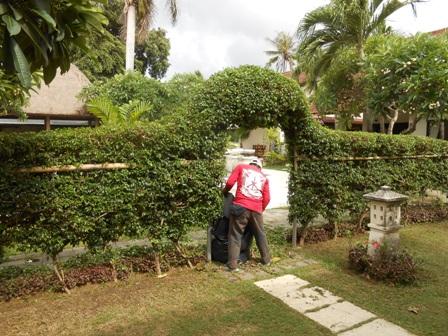 庭師のワヤンの仕事ぶり_d0083068_724117.jpg