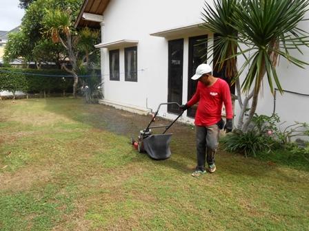 庭師のワヤンの仕事ぶり_d0083068_7394416.jpg