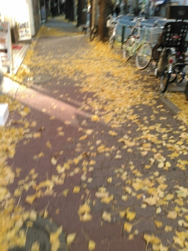 風の強い中の散歩_c0162773_15544743.jpg