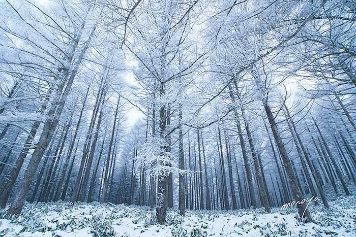 霧氷の高ボッチ高原_c0085877_22022460.jpg