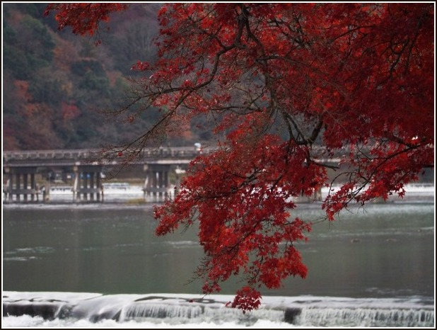 2015年 京都紅葉ラスト_c0228386_1627573.jpg
