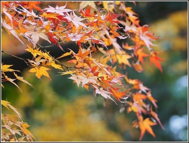 2015年 京都紅葉ラスト_c0228386_166658.jpg