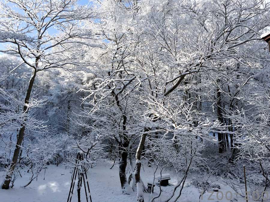 雪降ったよ_c0223095_2235542.jpg