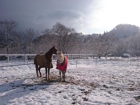 二度目の冬将軍_e0186499_20161389.jpg