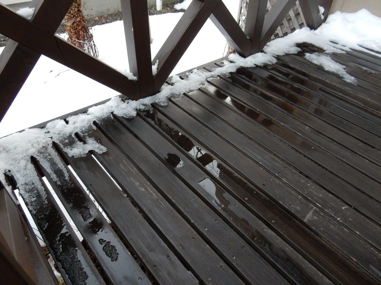 暖冬はこのまま続くのか_c0025115_21041513.jpg