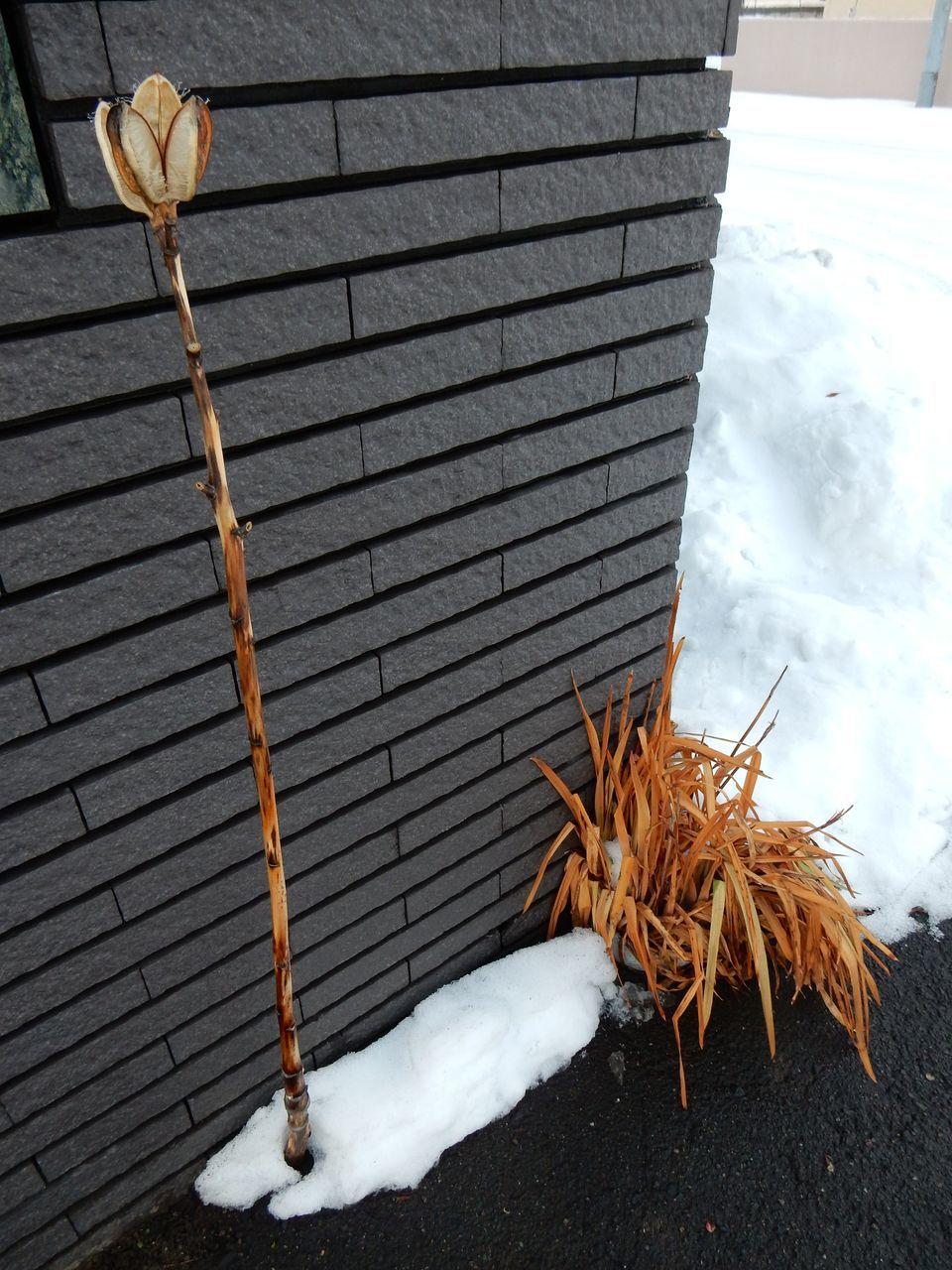 暖冬はこのまま続くのか_c0025115_21062471.jpg
