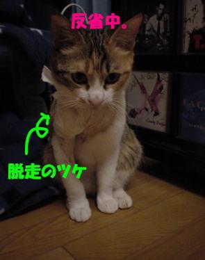 ねこ・・・くー_d0353129_03152310.jpg