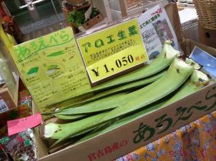 沖縄に行きたい_d0353129_03162454.jpg