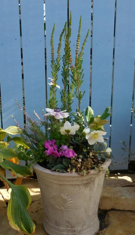 冬の戸外を彩る寄せ植え_f0139333_1142577.jpg