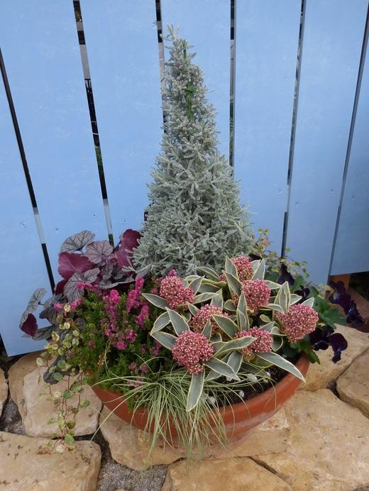冬の戸外を彩る寄せ植え_f0139333_1161051.jpg