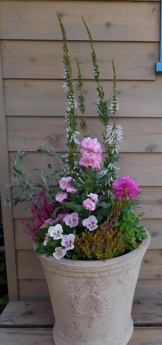 冬の戸外を彩る寄せ植え_f0139333_119426.jpg