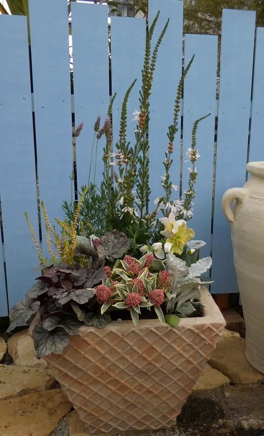 冬の戸外を彩る寄せ植え_f0139333_1204973.jpg