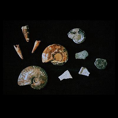 化石_f0247848_15433590.jpg