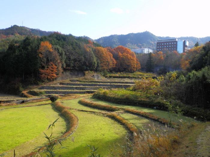 裏山ルート その(1) _f0219710_09515446.jpg