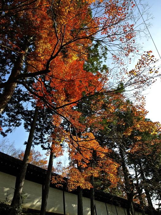 Orange  World_f0315034_17361029.jpg