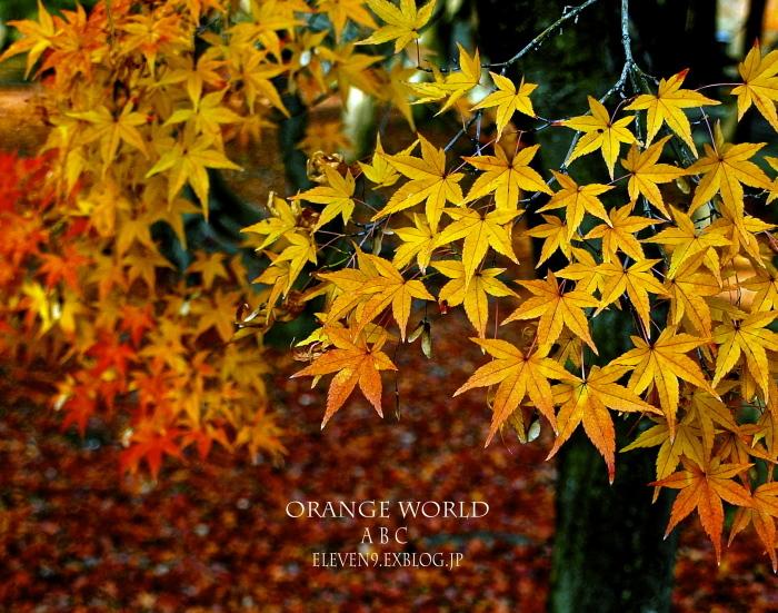 Orange  World_f0315034_17440667.jpg