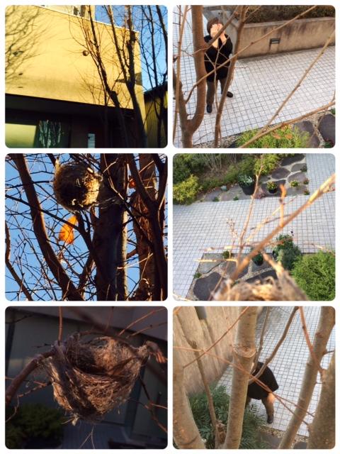 木登り_a0106637_11113758.jpg
