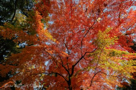 風景の写真 日比谷公園の紅葉_b0133053_0381670.jpg