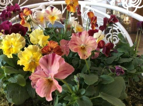 宮崎産まれの花は素晴らしい‼︎_b0137969_21090212.jpg