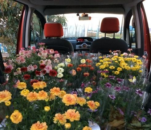 宮崎産まれの花は素晴らしい‼︎_b0137969_21273938.jpg