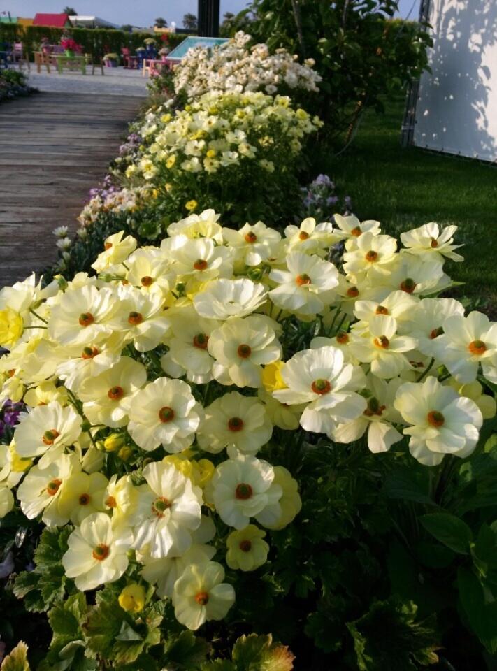 宮崎産まれの花は素晴らしい‼︎_b0137969_21475194.jpg