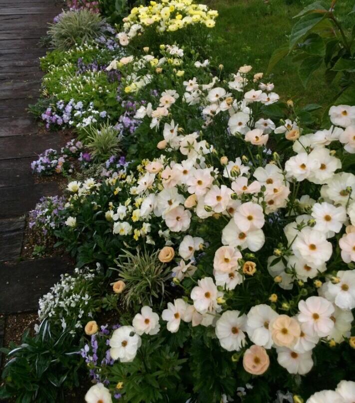 宮崎産まれの花は素晴らしい‼︎_b0137969_21482982.jpg