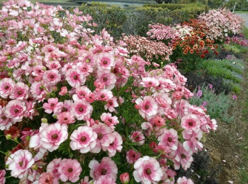 宮崎産まれの花は素晴らしい‼︎_b0137969_21492412.jpg