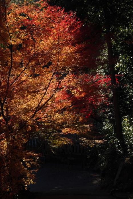 紅葉2015   光明寺                         _f0021869_033199.jpg