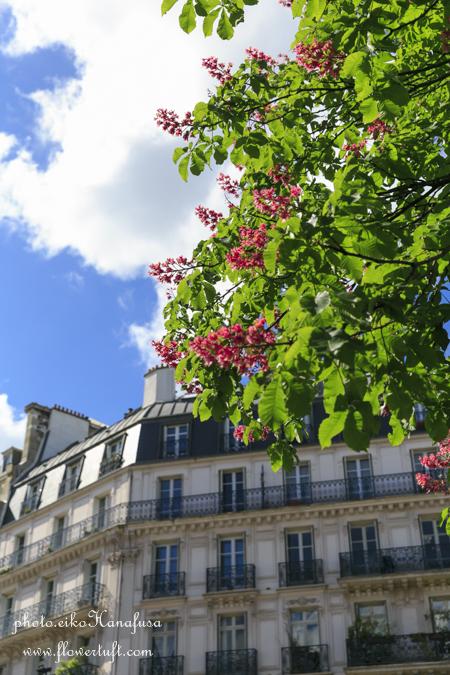 memories 2015 ② パリの街フォト_c0137872_10212887.jpg