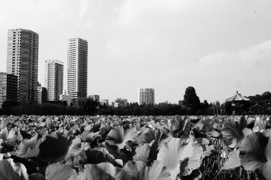 東京散歩。_c0180686_00143948.jpg