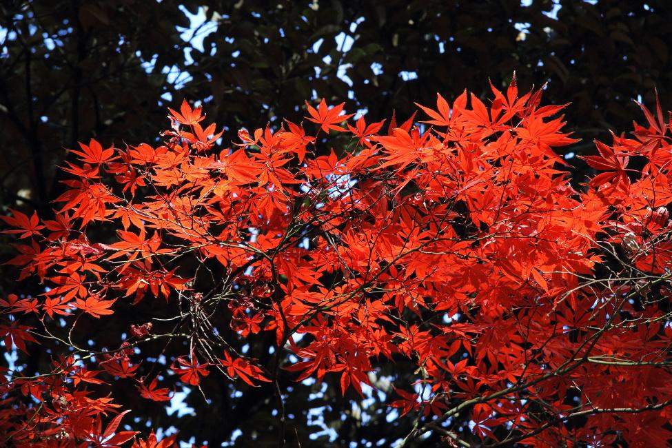 紅い季節_b0190710_22572184.jpg