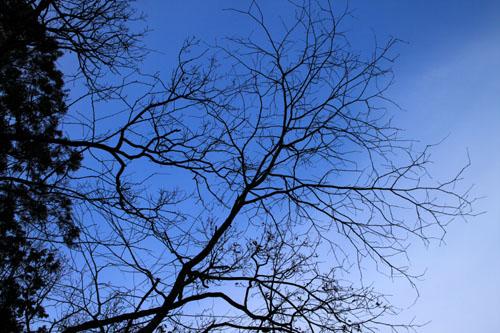 今日は冬至_e0048413_1401123.jpg
