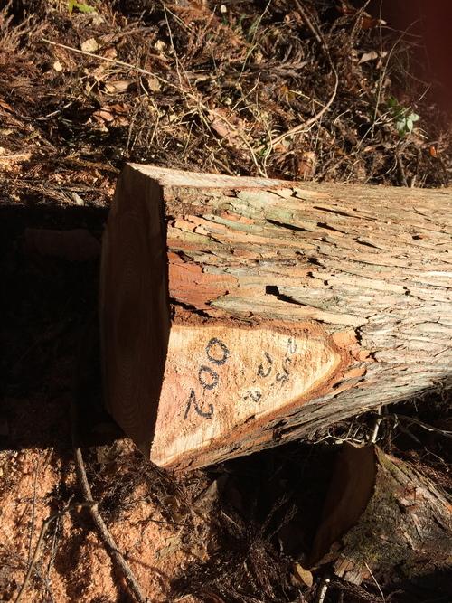 樹への禮儀・・・:切り旬と乾燥方法など_a0131025_1402473.jpg