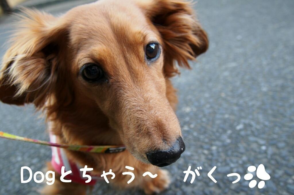 2015 年の瀬の奈良。。。_c0220065_23594607.jpg