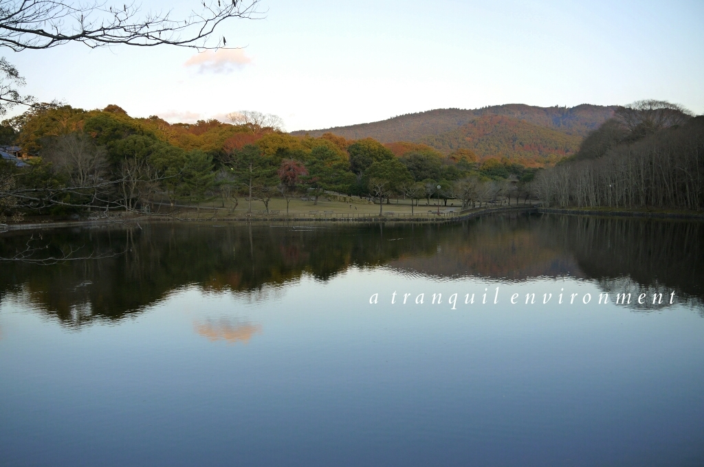 2015 年の瀬の奈良。。。_c0220065_23595167.jpg